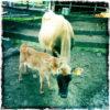 Milk: The udder story!