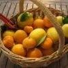 Orange Marmalade: easy recipe for everyone!