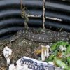 My Computer Hacked – A Snake in the Compost!