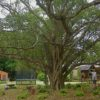 Trees: Solving Common Problems