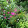 Pest Control & Companion Planting: Love your Bugs