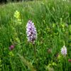 Importance of Meadows