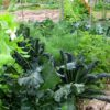 My Top Ten Tips for Starting a Food Garden