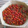 Kasundi – Spiced Tomato Relish