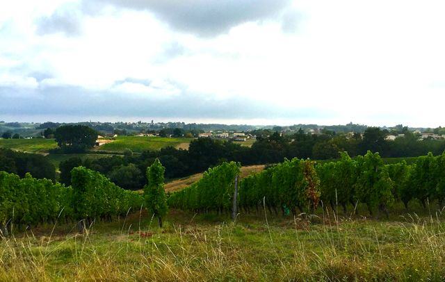 Cycling in France – Beyond Bordeaux – Day 2 Graves et Sauternes