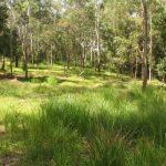 Natural Burial Grounds Fact Sheet
